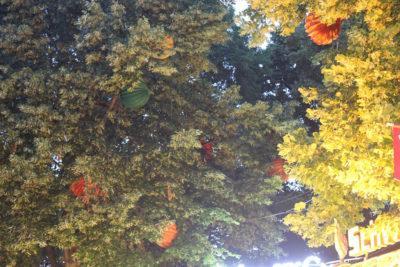 Die Bergkirchweih in Erlangen mit bunten und großen Lampions in den Bäumen.